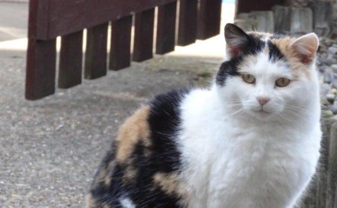 Help Street Cat Smudge get life-saving surgery