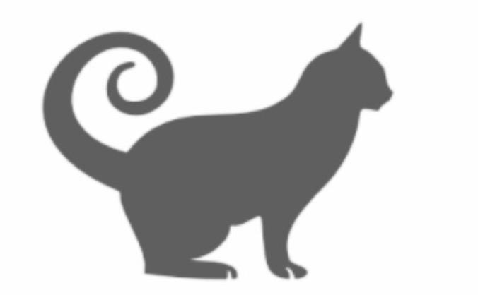 Cat Café Cheltenham