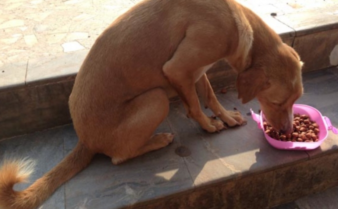 Feed Monsoon Dogs and Cats in Agonda, Goa