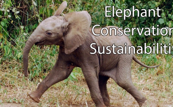 Elephant Conservation India
