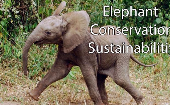 Elephant Conservation India