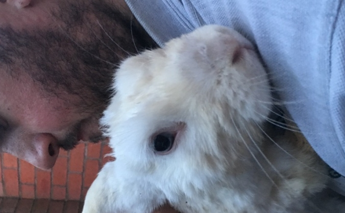 Rabbit Rescue