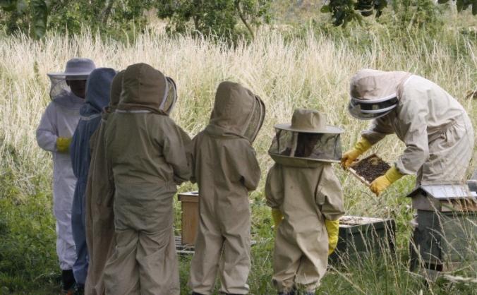 Bee Innovative