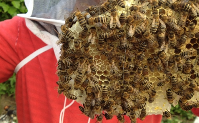 Save Happy Bees in Greenwich