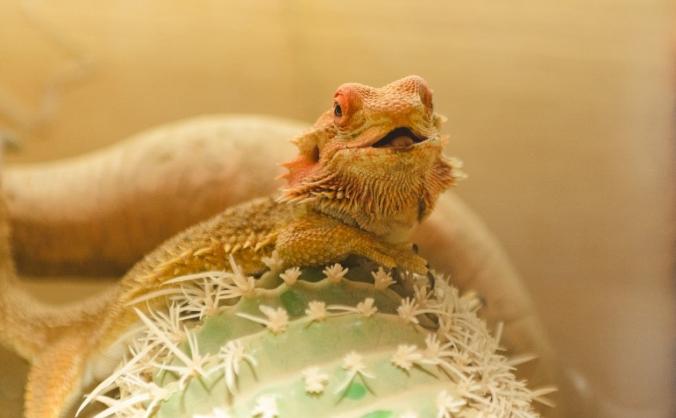 Safe Haven for Exotics Animals