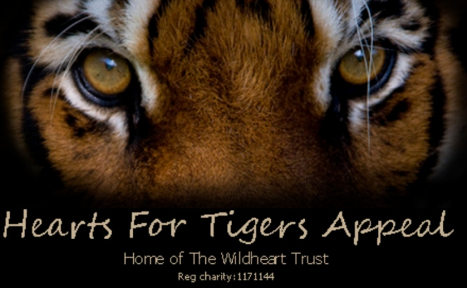 Hearts for Tigers appeal