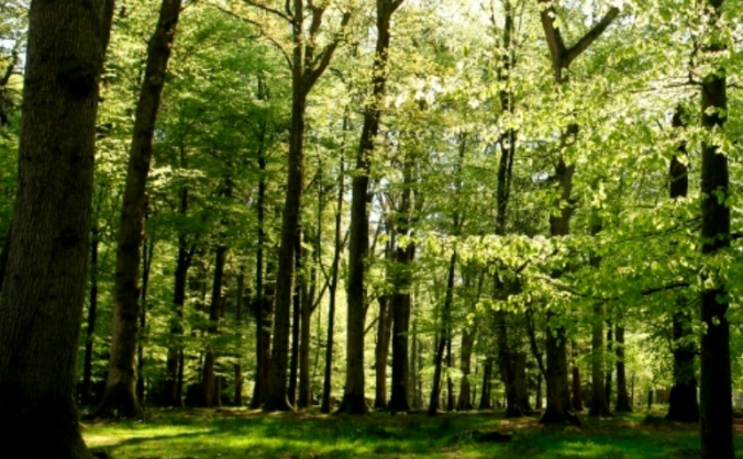 Forest of Ancestry