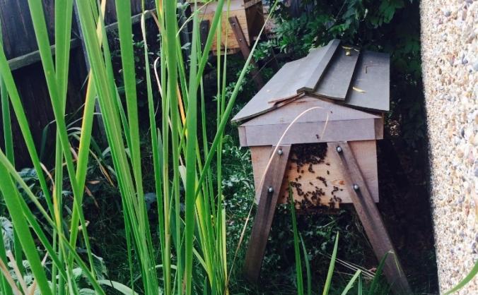 Honeybee Growth Plan