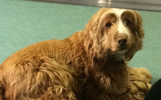 Therapy dog needing help with vets bills