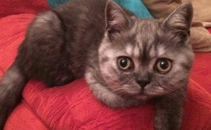 Help Save Thomas the Cat
