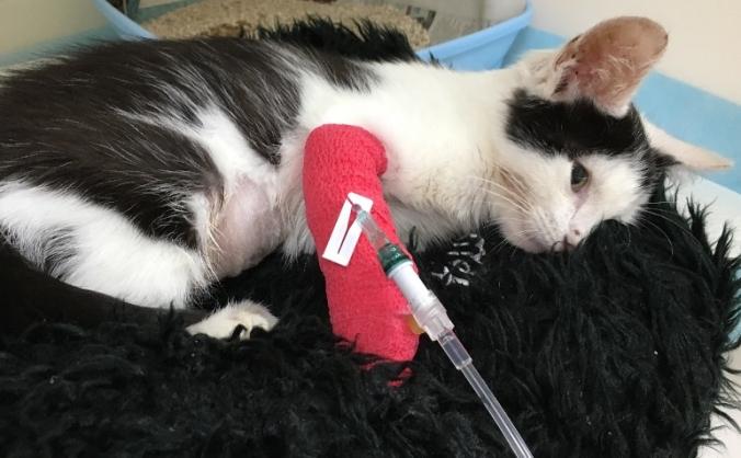 Dobby's Life Saving Surgery