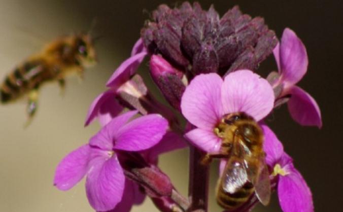 Helping Honey bees in Bradford