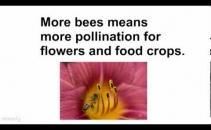 Bee Happy: Pure Raw British Honey