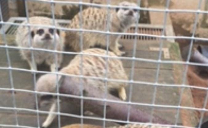 Private Exotic Animal and Bird Sanctuary - Fences