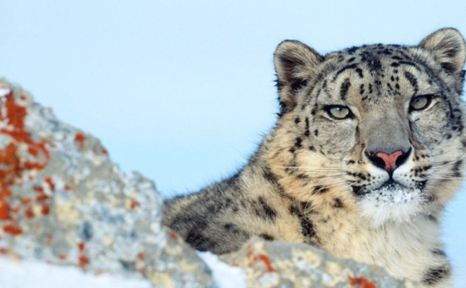 Snow Leopard Conservation Trip.