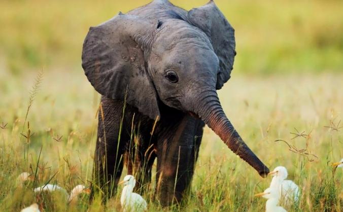 Elephant and Community Volunteering Programme