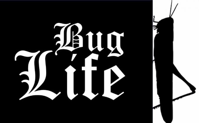 Bug Life August 2017