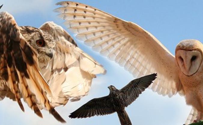 Wild Wings Birds of Prey
