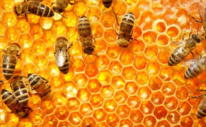 Bee Happy Honey Project