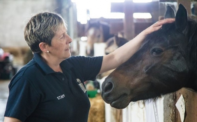 Only Foals and Horse Equine Wellbeing Program