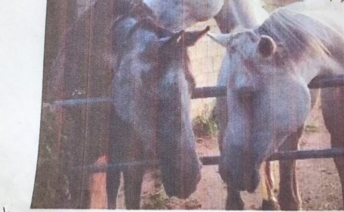 Please Help  save  sanctuary  for arabian horses