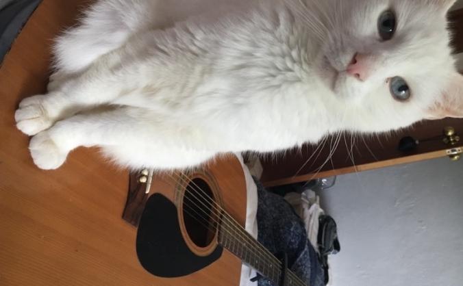 Stolen guitar!
