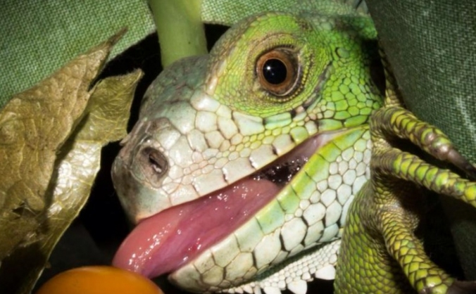 Inspire Exotics Zoological Centre