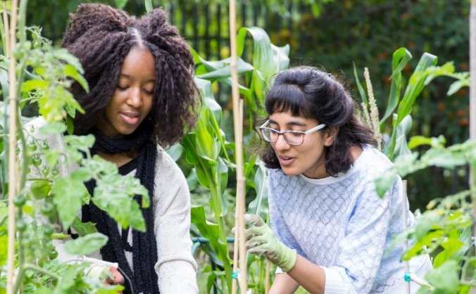 Urban Growth: Garden Therapy in Camden