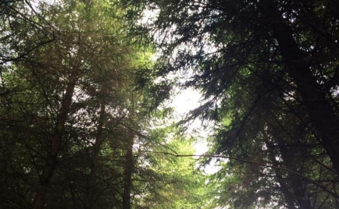 Protect Woodburn Forest and Reservoirs