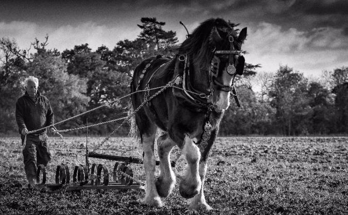 Save the UK's Heavy Horses