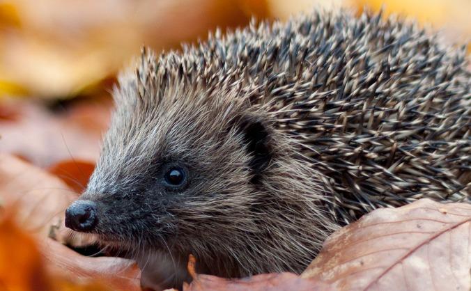 Nature Now - Enjoy & protect wildlife in Avon