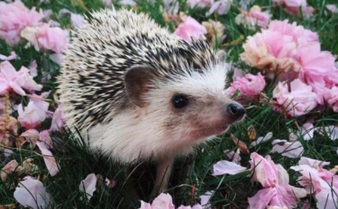 The Hedgehog Sanctuary