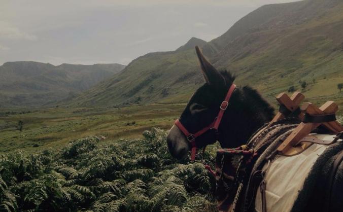 Snowdonia Donkeys