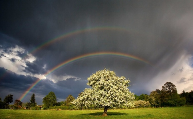 The Rainbow Tree Intuitive Healing
