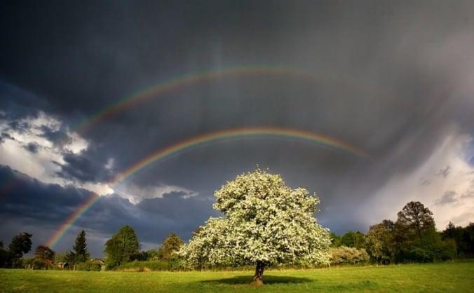 The Rainbow Tree Intuitive Healing