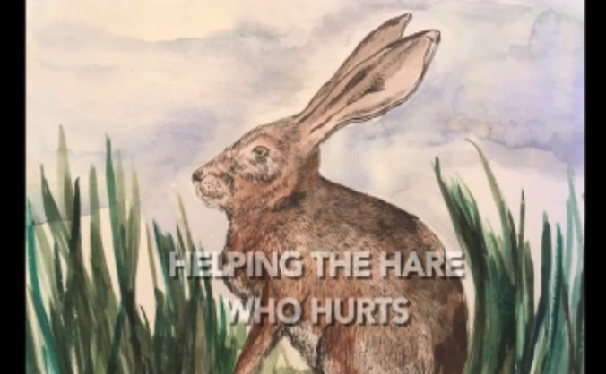 Helping the Hare Who Hurts