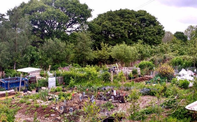 Tregarth Community Allotments
