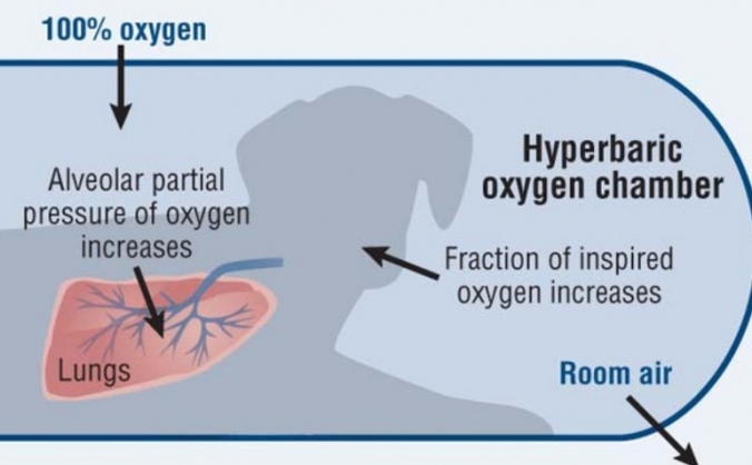 Hyperbaric Oxygen Therapy for Animals