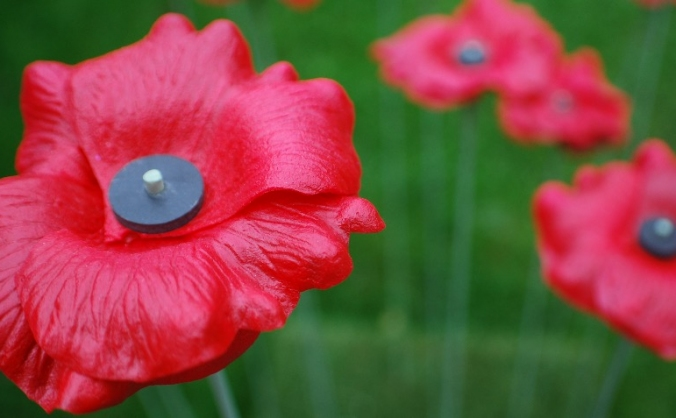 The Somerset Poppies