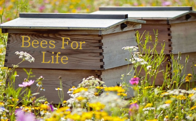 Bees for Life