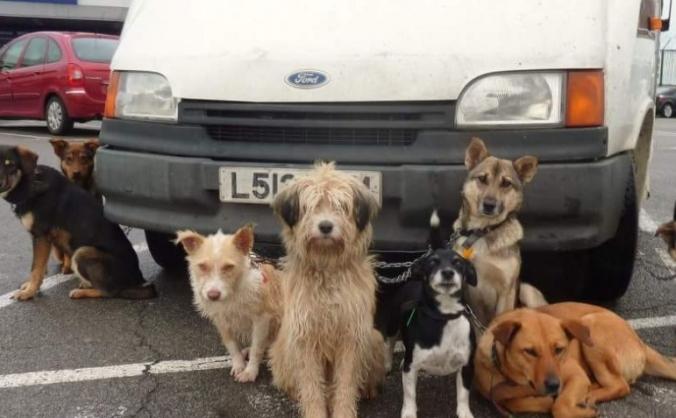 Bulgarian dog rescue mission