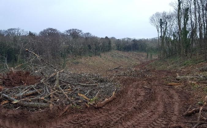 Replanting Churston Woods