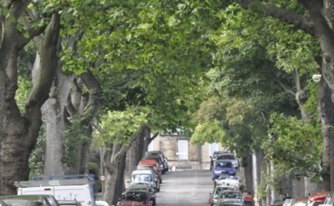 Western Road Memorial Trees Repair and Restoration