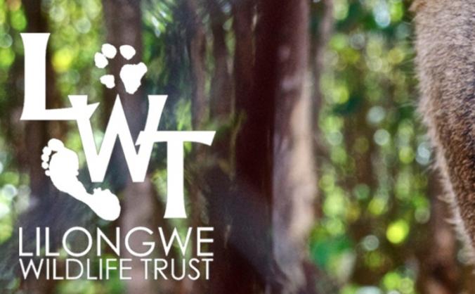 Lilongwe Wildlife Centre Volunteering Trip