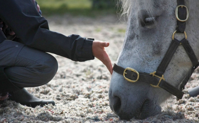 Adventures with Horses, Well-being Courses