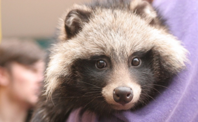 Help MagnaRep save animals Lives!!