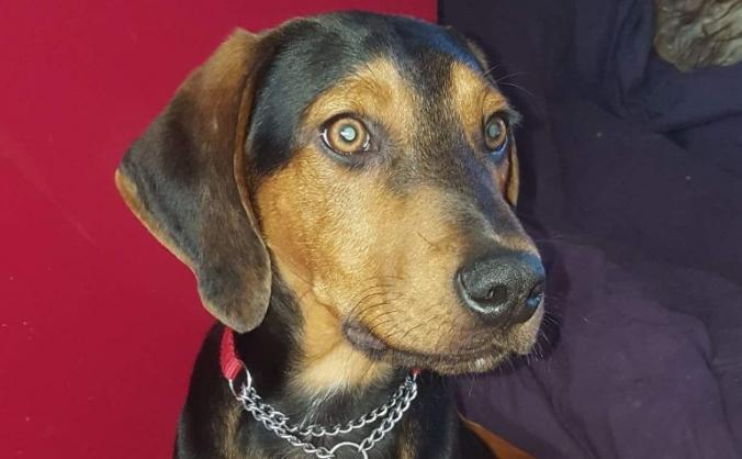 Help Allie with vet fees for Rueben