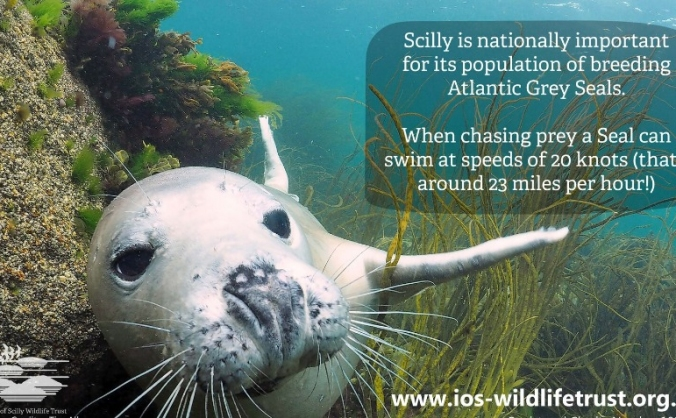 Love the Sea; Love Scilly