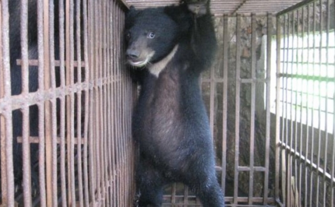 Volunteering With Rescued, Abused Bears In Romania