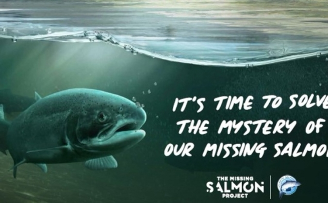 The Missing Salmon Project